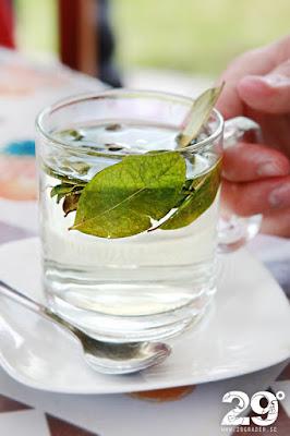 Coca te - vanligt i Anderna