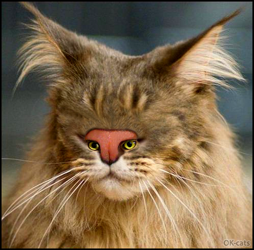 Photoshopped Cat picture • Amazingly amazing: a mutant cat with tiny eyes in nose. So weird and funny.