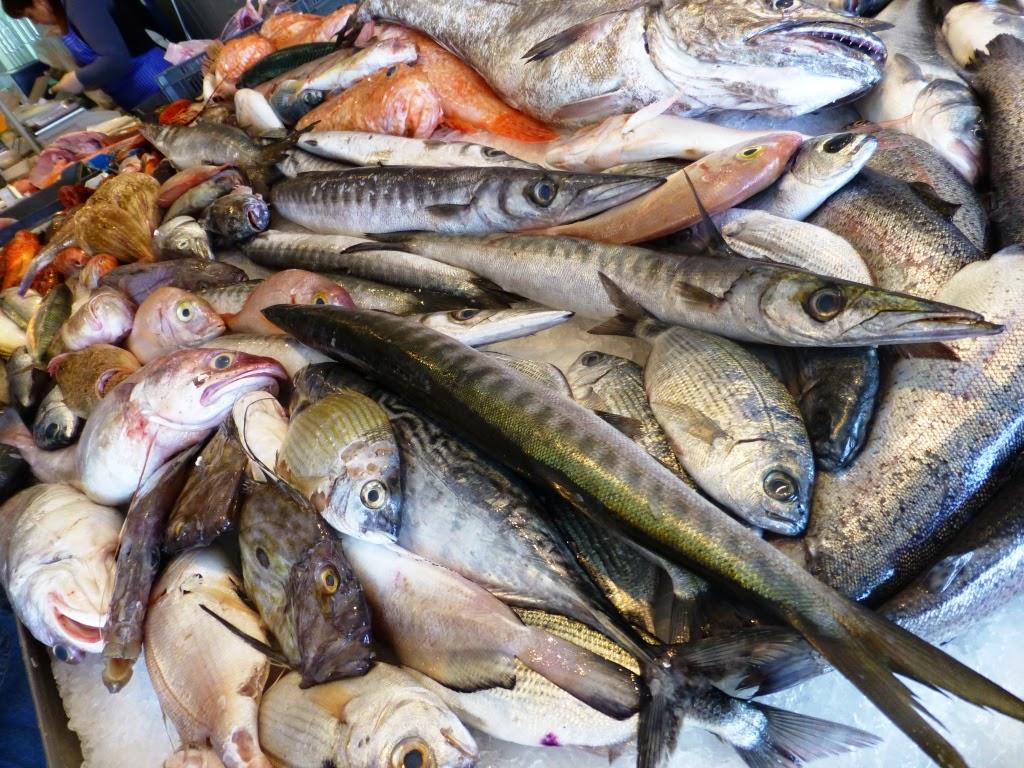 il supremo alcune specie di pesci di mare On specie di pesci