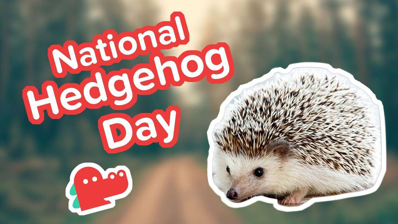 National Hedgehog Day Wishes Photos