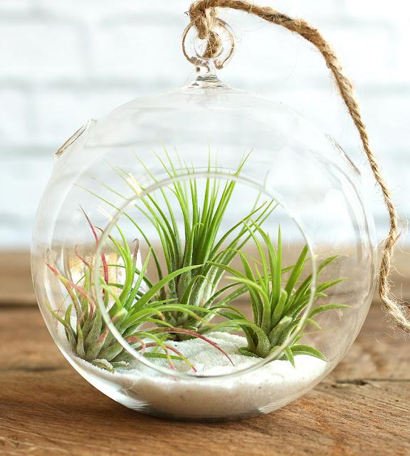 100 Incredible Diy Terrarium Ideas For Indoor Gardening To Make Your