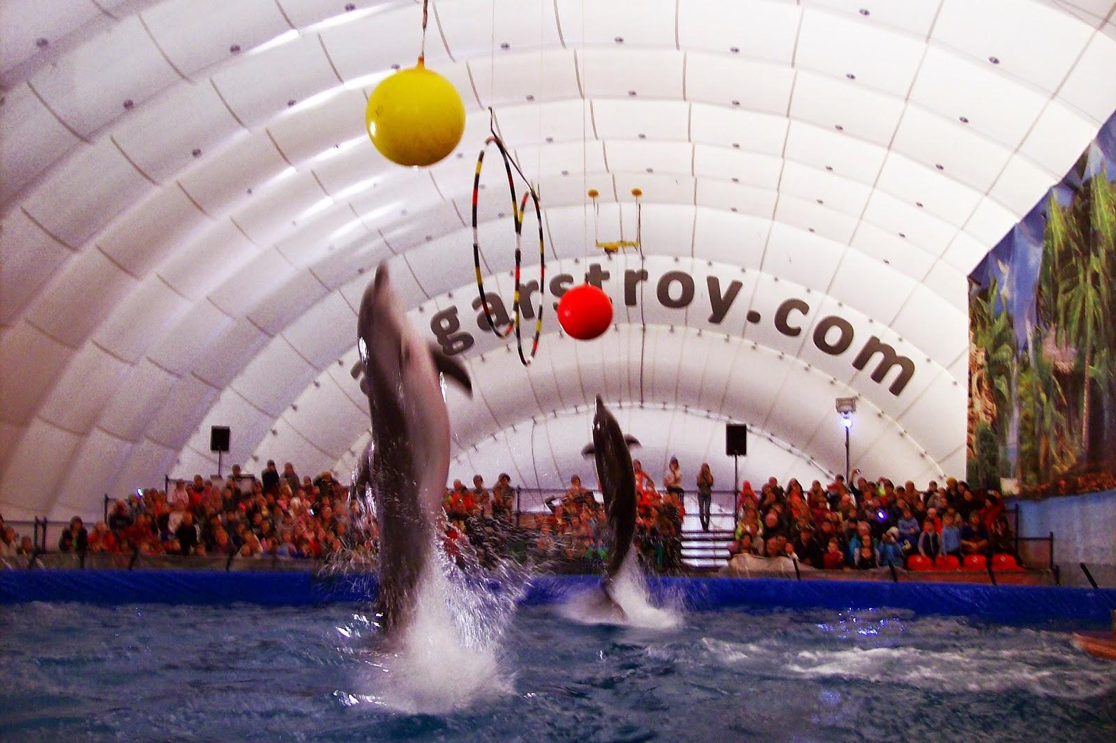 красавцы - дельфины