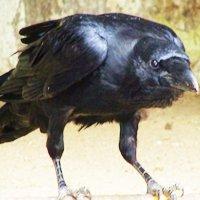 raven_400x400.jpg