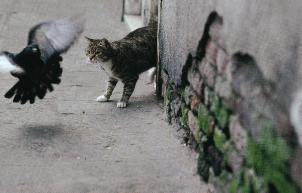 Stray cats of Venice, Italy