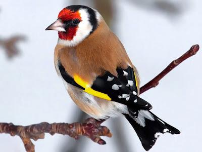 أجمل صور الطيور الملونة