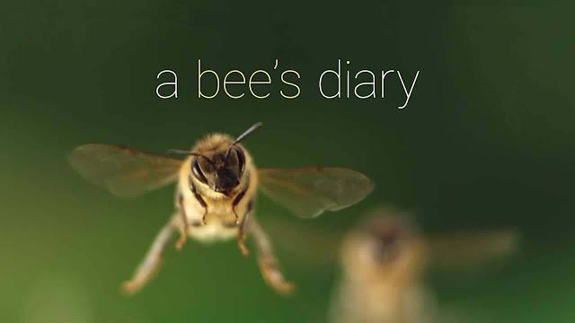 ημερολόγιο μιας μέλισσας