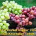 5 Manfaat Herbal Anggur Untuk Diet dan Kesehatan Tubuh