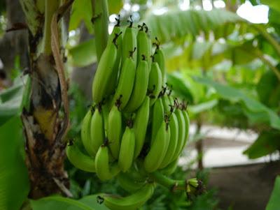 バナナジュース2