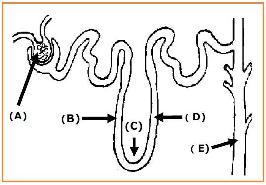BIOLOGI GONZAGA: SOAL BIOLOGI YANG SERING KELUAR KELAS XI