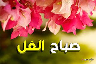 صباح الفل اجمل صور صباح الفل بوستات للصباح