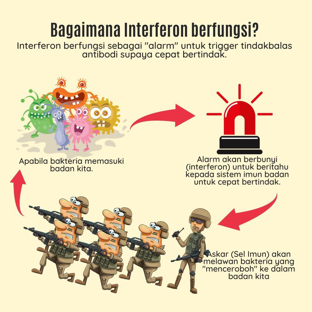 Cara Sistem Imunisasi Badan Bekerja