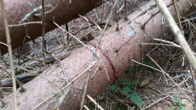 Nouă inculpaţi trimişi în judecată în dosarul tăierilor ilegale de arbori prin înscenarea unor calamităţi naturale