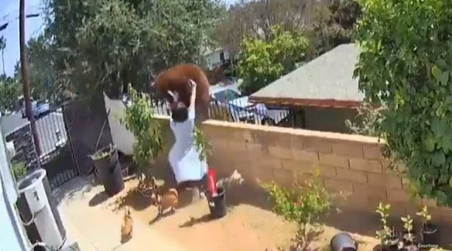 Video shows teen girl shoving huge bear over fence to save her dogs
