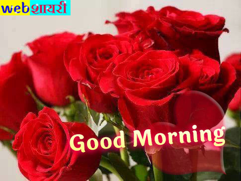good morning red flower,good morning message in rose,