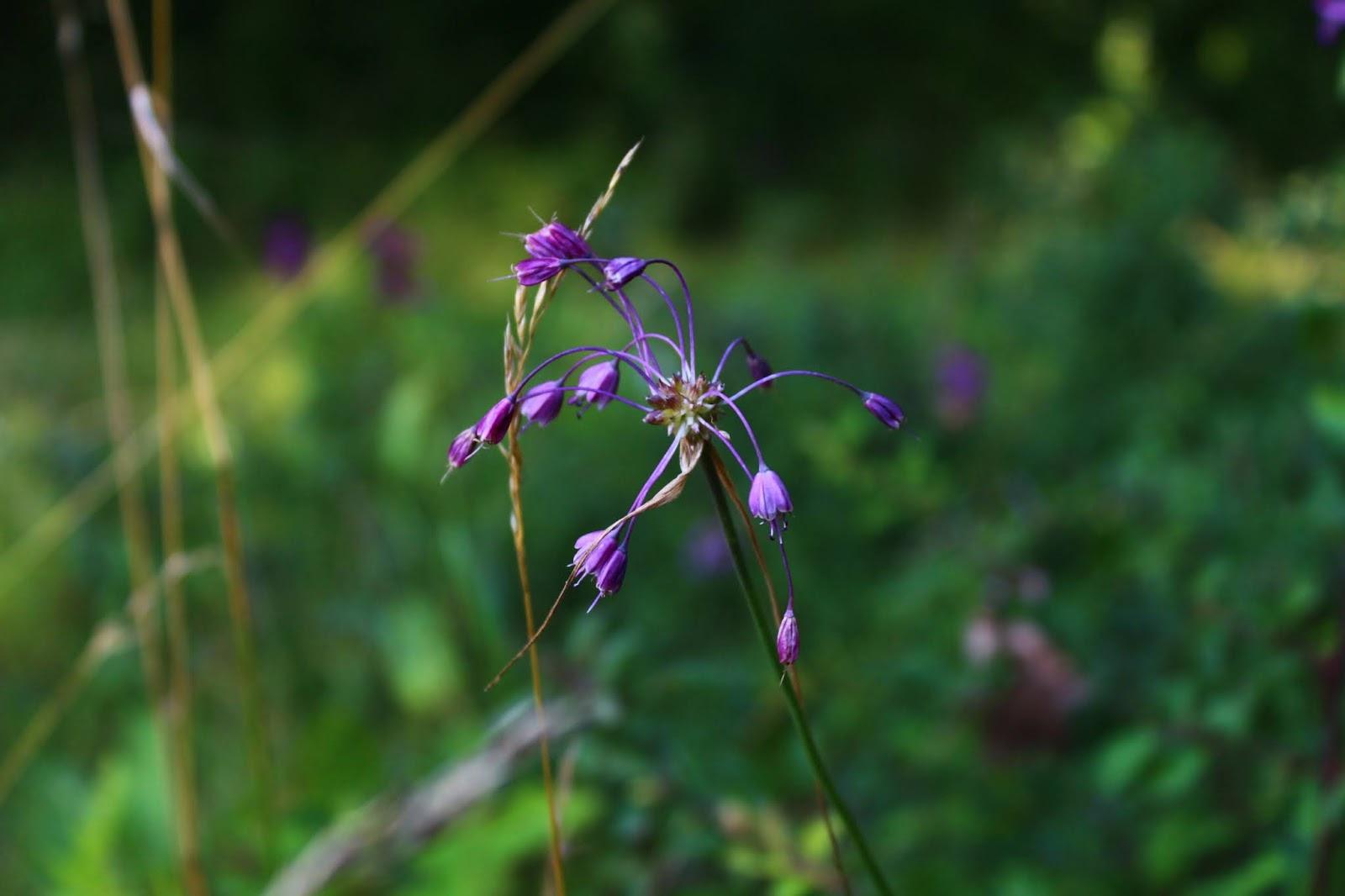 virágok biológiai szempontból látásjavító műhely