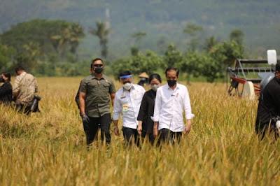 Tinjau Panen di Malang Presiden Jokowi Tunjukkan Produksi Padi Memenuhi MCeR7D Dengan Tidak Amati Panen di Malang, Presiden Jokowi Tunjukkan Produksi Beras Memuaskan