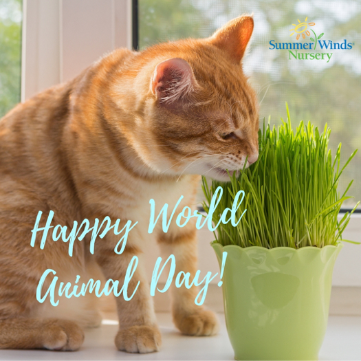 World Animal Day Wishes For Facebook