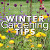 Winter isn't the time for gardeners to sit back and wait