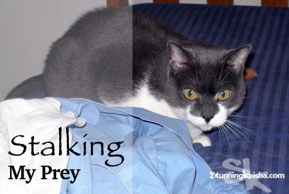WW—Stalking My Prey