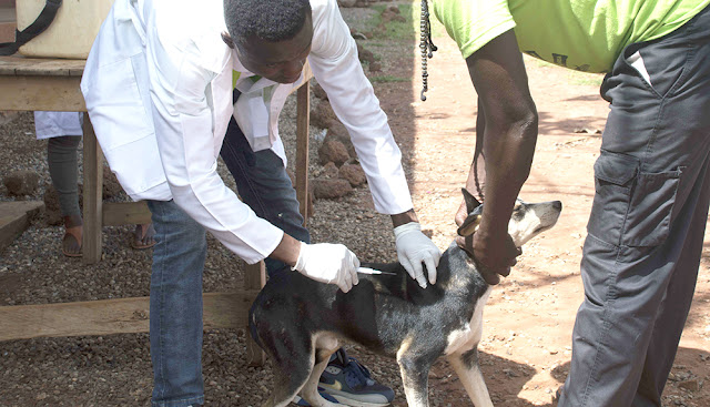 World Health Organisation (WHO) to eradicate rabies by the year 2030, the Ghana Veterinary Medical Students Association of the Kwame Nkrumah University of Science and Technology (GVMSA–KNUST)