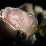 Kata Bijak Embun Pagi Yang Meyejukan Hati & Penuh Dengan Makna Cinta