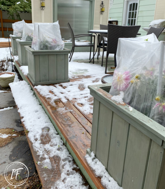 How to make quick and easy frost blankets from clear yard waste bags in a pinch to protect large flower planters from spring or late summer frost.