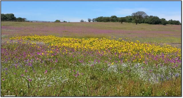 a valley of flowers-kaas pathar, satara