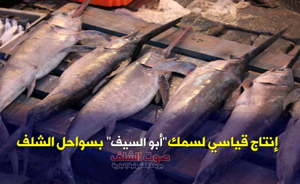 """توقع إنتاج نحو6 آلاف طن من  سمك """"أبو سيف"""" بسواحل الشلف"""