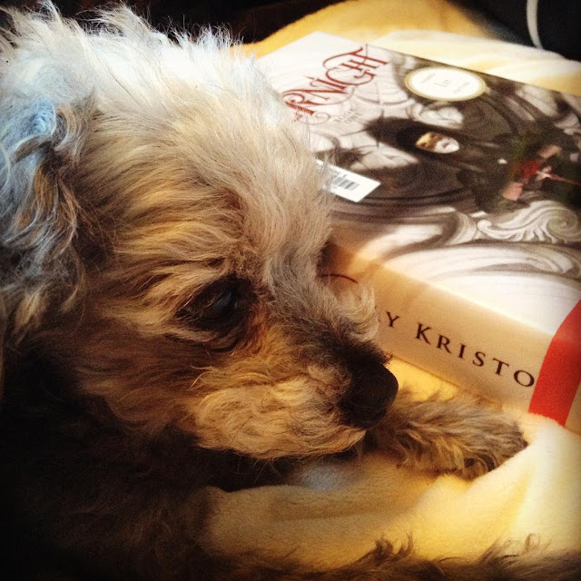 Short-haired Murchie lies beside a hardcover copy of Nevernight. Its white cover features a pale-skinned girl wearing a domino mask and clutching a knife in front of her. Wing-like shadows rise from her shoulders.