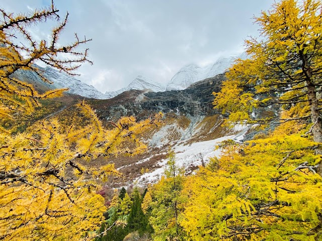 Mountains and forests in Sichuan in the yellow autumn beautiful like fairyland