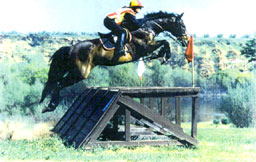 Samantha Harvey riding Cross Country on Negative G