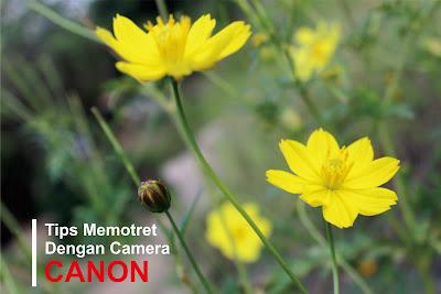5 Tips Memotret dengan Camera Canon