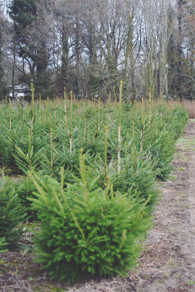Crockford Bridge Farm Christmas Trees