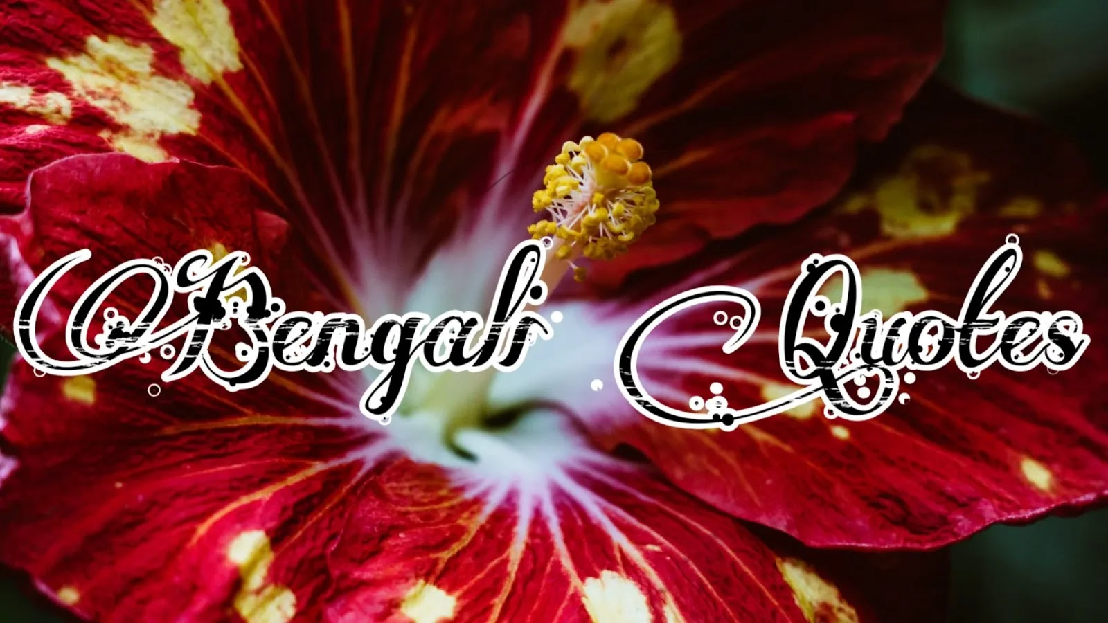 quotes,bangla quotes,quotes in bangla,life changing quotes in bengali,heart touching quotes in bengali