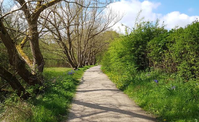 Küsten-Spaziergänge rund um Kiel, Teil 6: Der Rundweg um den Langsee. Die Wege entlang des Sees sind besonders im Frühling wunderschön und laden zu einer kleinen Wanderung ein.