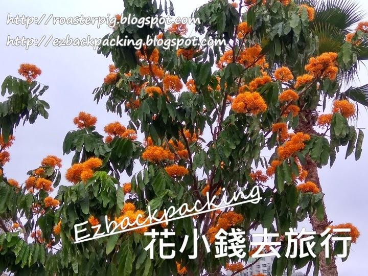 香港無憂樹
