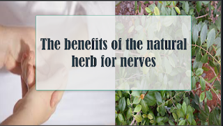 The benefits of the natural herb for nerves