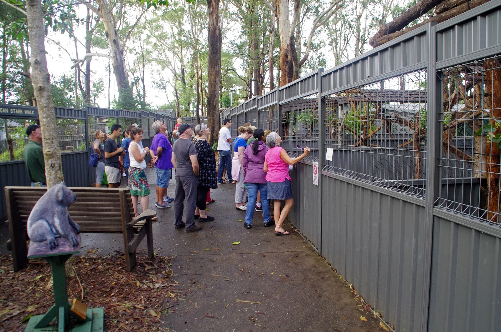 Port Macquarie Koala Hospital Guided Tour