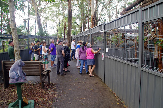 Port Macquarie Koala Hospital Guided Tour