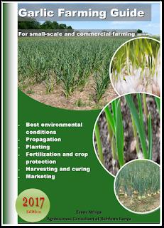 garlic farming in kenya pdf