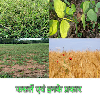 फसल क्या है एवं इनके प्रकार Crop and types of crops, फसल किसे कहते है यह कितने प्रकार की होती है इनका वर्गीकरण एवं महत्त्व