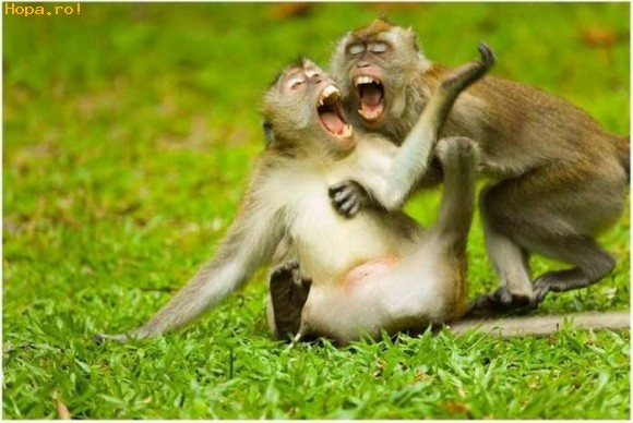 Animals Laughing Funniest Pictures-Images | Funny And Cute ...