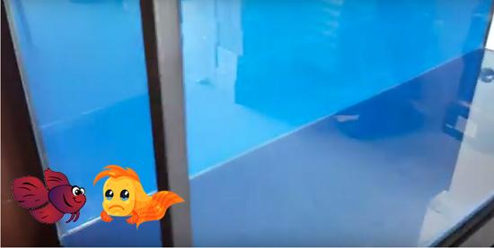 Pros & cons of painting glass aquarium