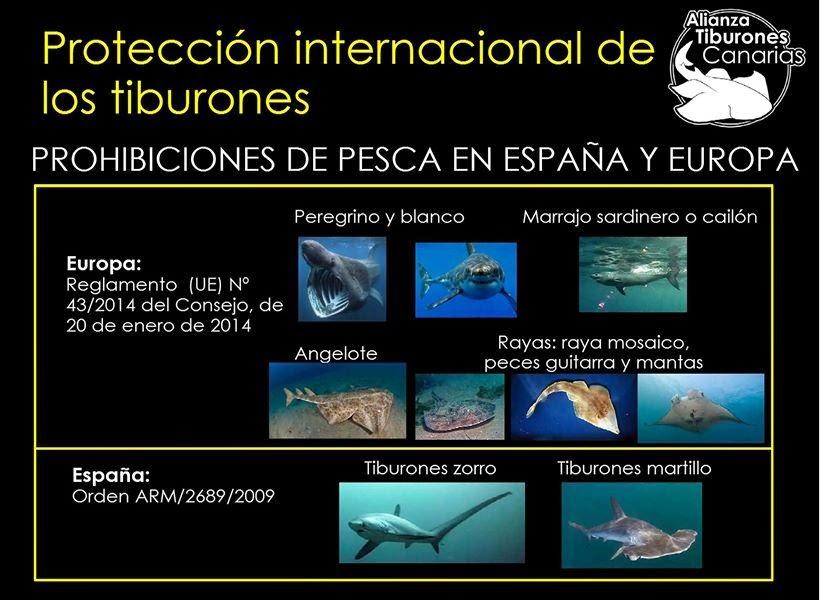 Schautafel geschützte Haie in Europa
