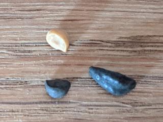 3 morning glory seeds