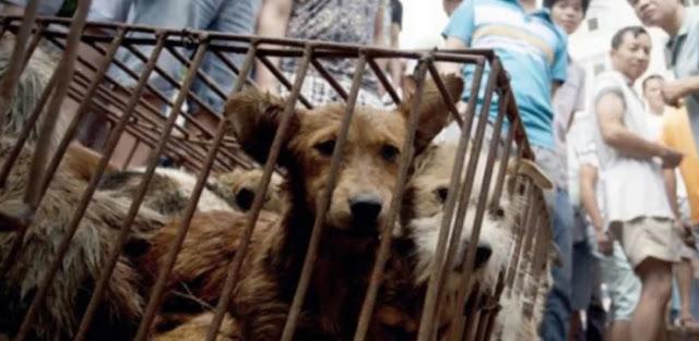 Preferenza della Cina per il cibo della fauna selvatica, cane e gatto