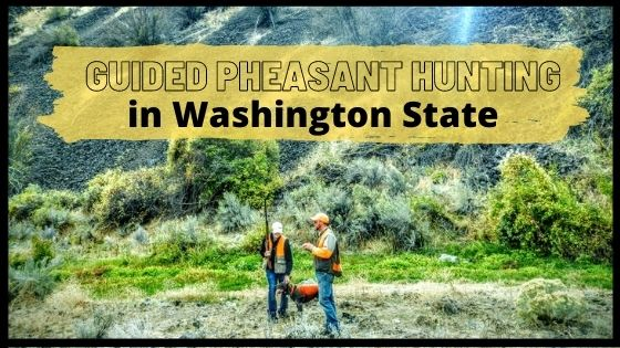 Guided Pheasant Hunts In Washington State