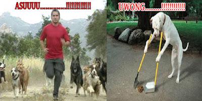 foto lucu anjing manusia