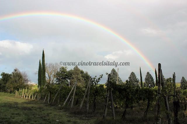 Orvieto wines and vineyards
