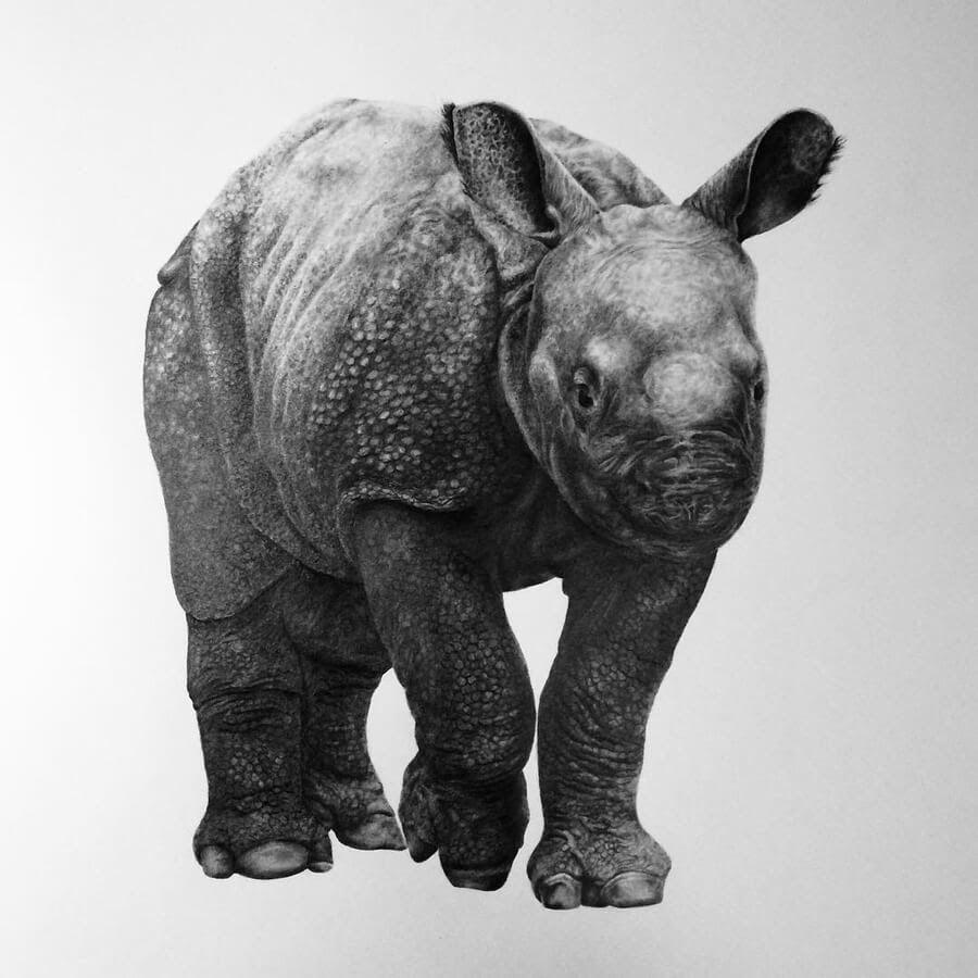 07-Baby-Rhino-Julia-M-www-designstack-co
